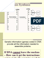 _8__Protein_Synthesis