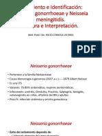Aislamiento e Identificación de Neisseria-1