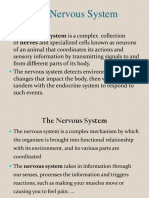Nervous System anatomy