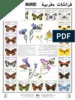 papillons.pdf