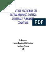 corteza y funciones cognitivas