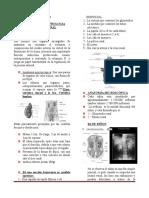 TEMAS PRIORITARIOS DE PATOTOLOGIA RENAL.doc