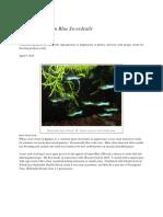 Asian_Blau_Japan_Blue_Swordtails.pdf