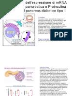 Persistenza Dell'Espressione Di mRNA Dell'Insulina Pancreatica e Proinsulina Proteica Nel Pancreas Diabetico Tipo 1