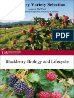 Blackberry Cultivars, McWhirt Nov_15,2016