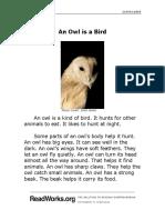 An Owl is a Bird