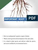 imp root traits