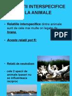 relatiiinterspecificelaanimale-110331112005-phpapp01.doc