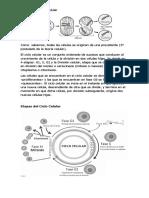 material ciclo celular