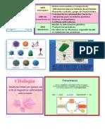 biologia, anatomia.docx