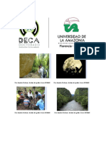 BROCHURE-DECA-Información-VF