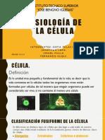 1543893265886_Fisiología de la célula.pptx