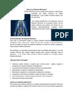 Qué es el Sistema Nervioso