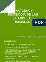Glandula Mamaria Varias Especies