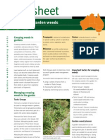 Managing Weeds Creeping