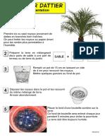 palmier dattier fiche de plantation