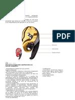 Descensores I'D Ficha Tecnica y Hoja de vidacx.pdf