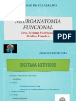 NEUROANATOMIA FUNCIONAL .pdf