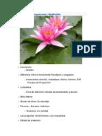 Psicología Transpersona1_ meditacion