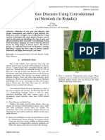 Prediction of Rice Diseases Using Convolutional  Neural Network (in Rstudio)
