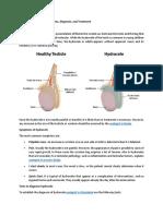 Testicular Hydrocele- Symptoms, Diagnosis, And Treatment