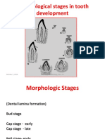 odontogenesis 2- bud and cap stage
