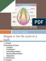odontogenesis-111116051748-phpapp02.pdf