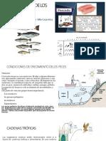 Morfología de los pescados 2
