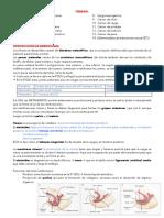 1. Embrio y anomalías congénitas pt 1.pdf