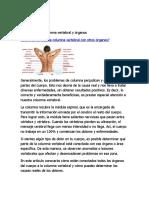 conexión entre columna vertebral y órganos.docx