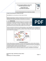 Practica 5 Guía División celular