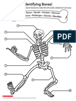 Identifying Bones!.pdf