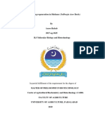 Arzoo thesis.docx
