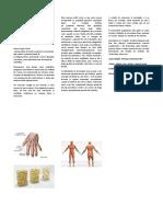 Doenças osteomusculares