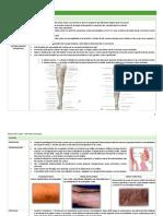 2.-Patologia Venosa
