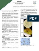 Practica 10 Observación de protozoarios