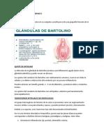 APARATO GENITAL FEMENINO II