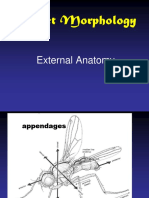 Lab 3 Insect Morphology  External Anatomy.ppt