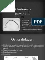 Schistosoma japonicum.