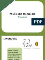 Trichuris trichiura (1)