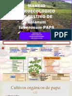 CULTIVO ECOLOGICO DE LA PAPA