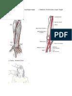 macam2 arteri