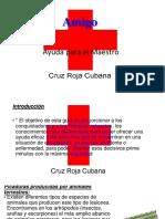 Ayuda Amigo Rey 2019