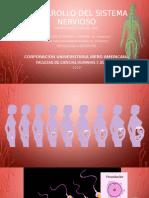 Desarrollo del sistema nervioso