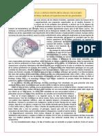 El papel de la corteza prefrontal en las decisiones 2012