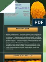 18presentationonbreedingtechniquesofmarigold-171203201450