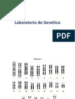 Laboratorio Cariotipo