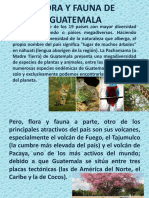 Flora y Fauna Guatemala
