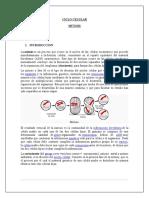 CICLO CELULAR- MITOSIS BIOLOGIA
