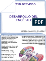 desarrollo_encéfalo